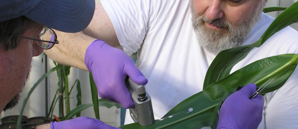 Art Zygielbaum and Dave Scoby measure water content in corn leaves