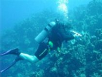 Diver sampling Caribbean coral communities