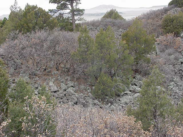Ground image of vegetation at Capulin Volcano National Monument.
